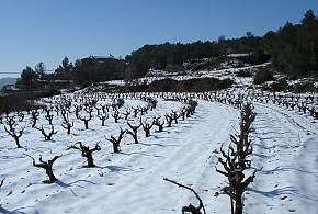 AGROTURISMO CAL JERONI